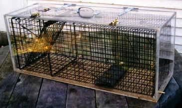 10_1_Cage_Trap_In_Carbon_Dioxide_Euthanasia_Chamber