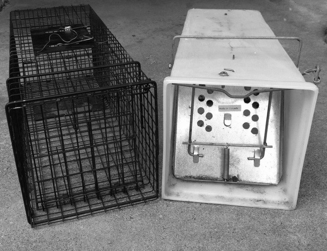 8_1_Cage_and_Box_Traps