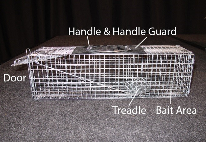 8_2_Single_Door_Cage_Trap