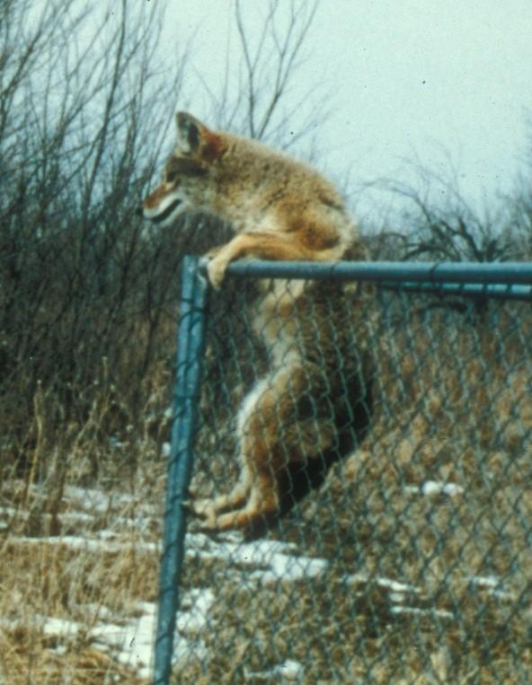 National Wildlife Control Training Program