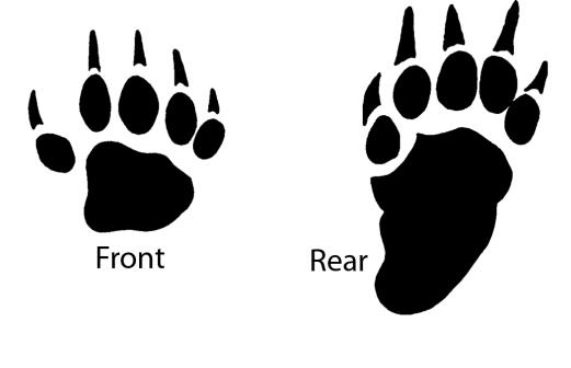 Figure 2. Tracks of a striped skunk. Image by PCWD.