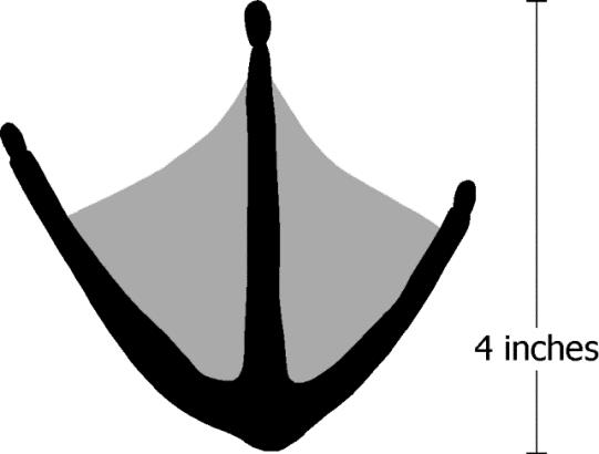 Figure 3. Track of a Canada goose. Image by Dee Ebbeka.