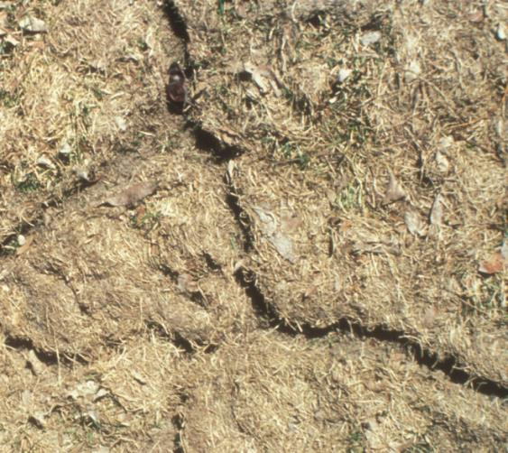 Figure 2. Trails cut into the grass and soil. Photo by the University of Nebraska-Lincoln (UNL).