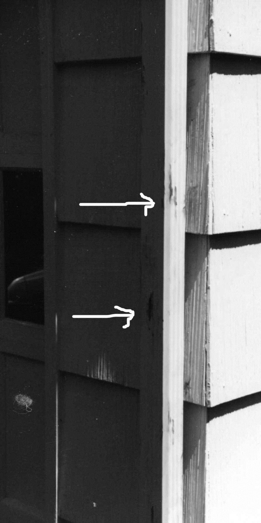 Figure 4. Arrows point to smudges indicative of climbing by raccoons. Photo by Stephen M. Vantassel.