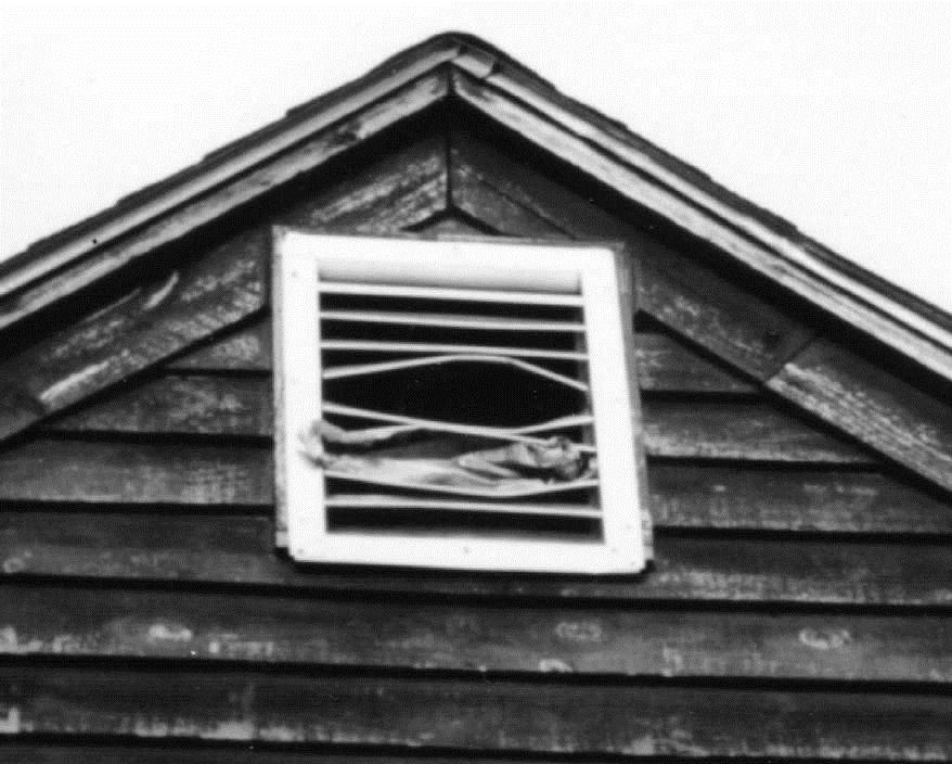Figure 5. A raccoon entered this attic through the vent. Photo by Stephen M. Vantassel.