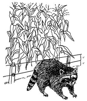Figure 6. Electric fences, where legal, are effective in protecting property from damage by raccoons. Image by PCWD.