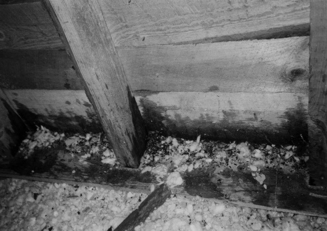 Figure 6. Urine and feces below an attic vent where flying squirrels were exiting the home. Photo by Stephen M. Vantassel.