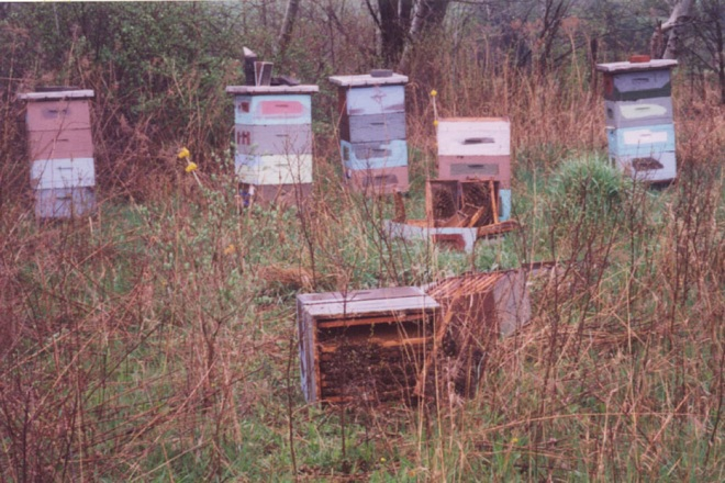 Figure 4. Beehives damaged by a bear. Photo by Paul D. Curtis.
